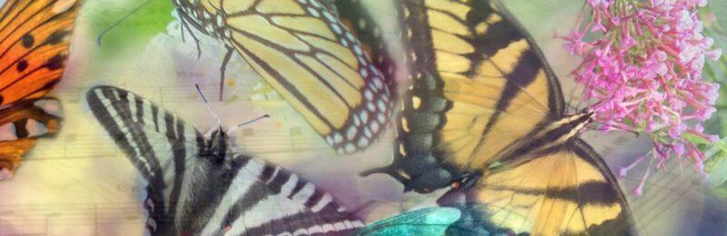 Wingdreamer